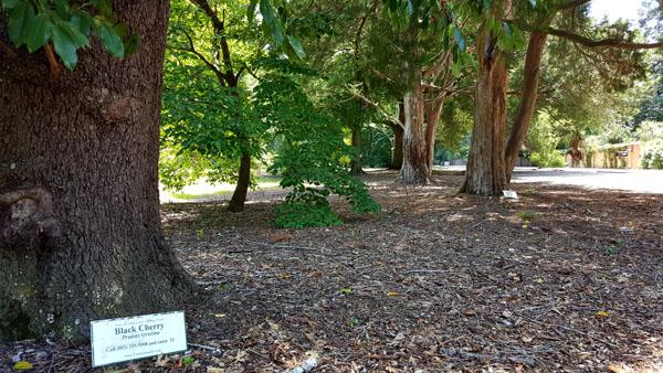 Aiken Arboretum Trail2   Thoroughbred Country