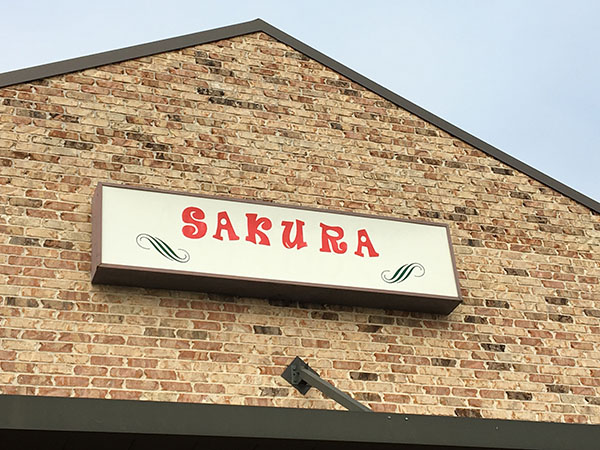 Sakura    Thoroughbred Country