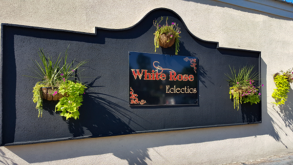 White Rose Eclectics | Thoroughbred Country