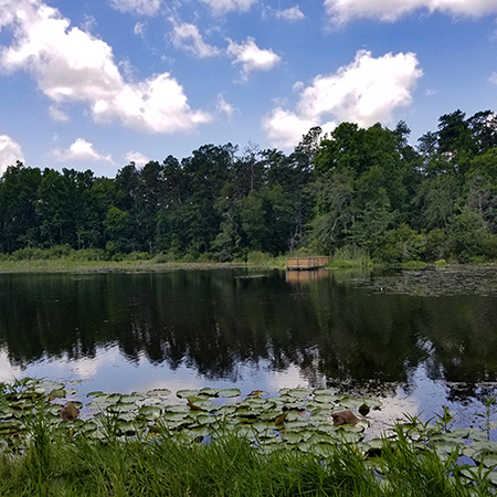 Barnwell SP Lake3 | Thoroughbred Country