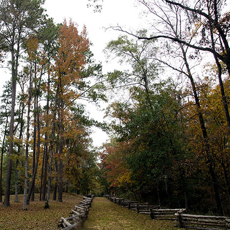 Hiking Trails South Carolina   Battle of Rivers Bridge State Historic Site   Thoroughbred Country