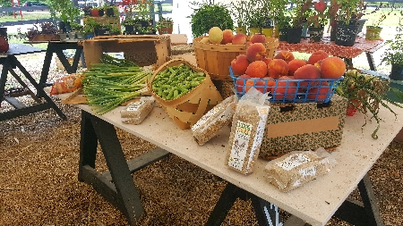 Farmers Market | Thoroughbred Country