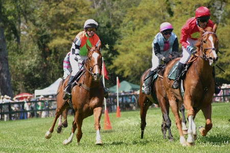 Horse Racing | Thoroughbred Country