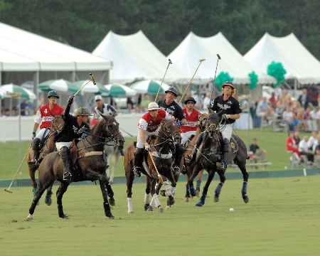 Polo | Thoroughbred Country