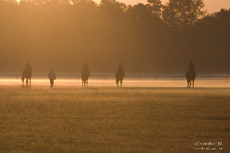 Sunrise at Aiken Training Track | Thoroughbred Country