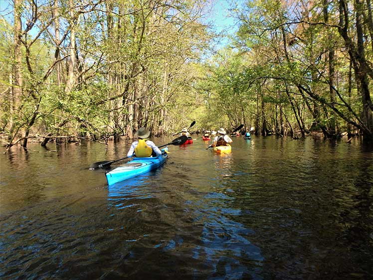 Paddle the South Fork of The Edisto River | Thoroughbred Country